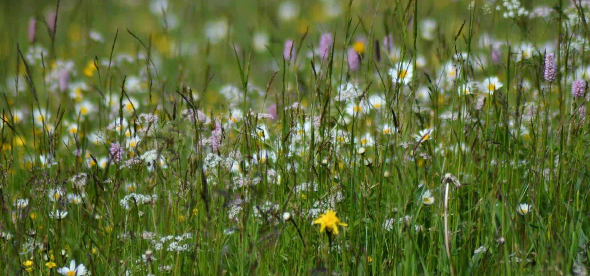 Wandern auf der Rodenecker Lüsner Alm: Endlich wieder Sommer