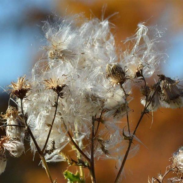 Regentropfen auf Herbstgras 2_0002_Herbstblume