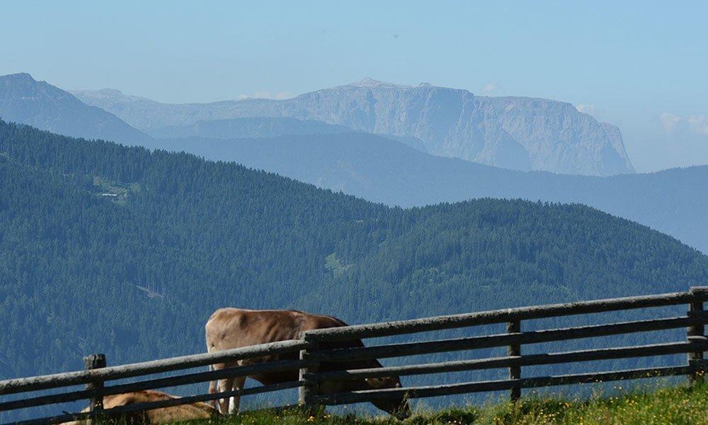 Urlaub in Südtirol auf der Roner Alm